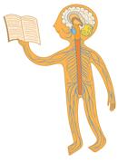 Anatomi online